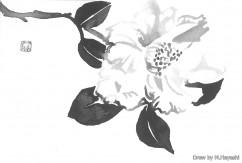 Drew by M.Hayashi